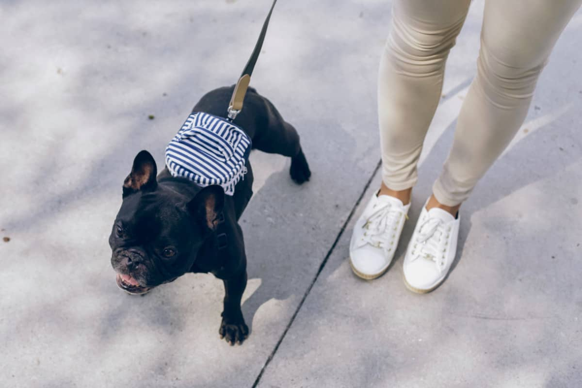 how to start a dog walking business in your neighborhood
