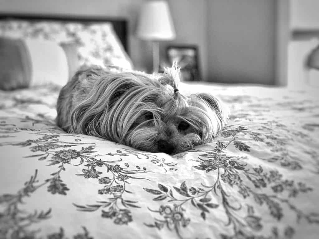 dog friendly hotels nyc