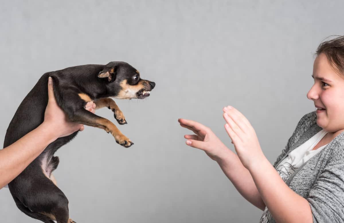 How do I punish my aggressive dog