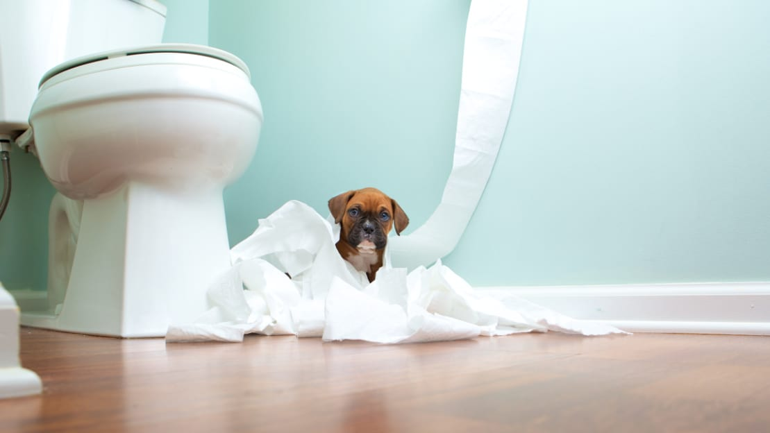 How do I stop my puppy from eating my socks, ripping apart delicate things, and tearing apart toilet paper